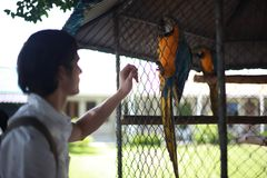 Man with hand feeding of parrot in the park stock photography