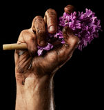 Man hand with flower Royalty Free Stock Photo