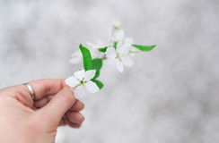 Man hand gives a white flower with love. Romance, feelings. Closeup Stock Photo