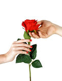 Man hand giving woman red rose Stock Photo