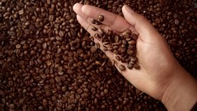 Man`s hand full of coffee beans. Man hand hold coffee beans and then throw it down. Top view Royalty Free Stock Images