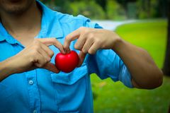 A man hand  hold  red  heart. A man hand  hold  red  heart pillow. A young man show red heart beside tree in park Stock Photo