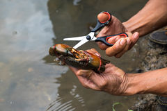 Man hand holding a crab try to leave cut off net Stock Photography
