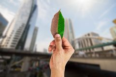 Man hand holding half brown and green leaf on blurred city background. Environmental concept Stock Photo