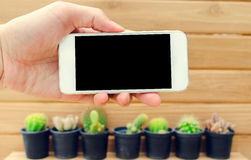 Man hand holding mobile phone blank screen with cactus and wood Stock Photo