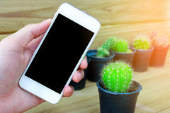 Man hand holding mobile phone blank screen with cactus and wood Royalty Free Stock Photo