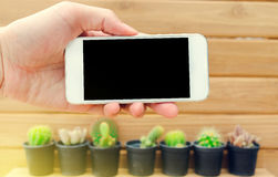 Man hand holding mobile phone blank screen with cactus and wood Stock Photos