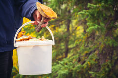 Man hand holding Mushroom pail fresh picked Royalty Free Stock Photo