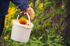 Man hand holding Mushroom pail fresh picked Stock Photo