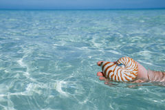 Man hand holding nautilus shell in clear blue water sea,, shallo Royalty Free Stock Photography
