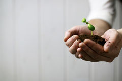 Man hand holding sprout in palms Royalty Free Stock Photos