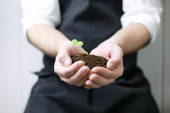 Man hand holding sprout in palms Stock Photography