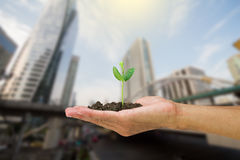 Man hand holding young green sprout isolated on blurred city background Stock Photos