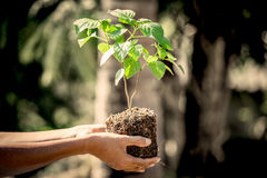 Man hand holding young tree for prepare into soil Royalty Free Stock Photo