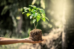 Man hand holding young tree for prepare into soil Stock Photo
