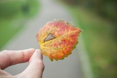 man hand with little autumnal leaf between the finger Royalty Free Stock Images