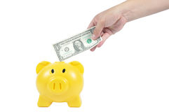 Man hand putting money in to yellow piggy-bank, business concept Stock Photos