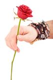 Man hand with red rose Stock Photos