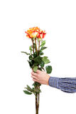 The man hand with three roses Stock Photo