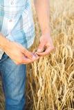 Man hand touching wheat Stock Photos