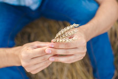 Man hand touching wheat. Ears on the field Royalty Free Stock Images