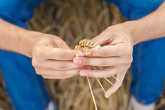 Man hand touching wheat. Ears on the field Stock Image