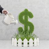 Man hand watering dollar plant Royalty Free Stock Images