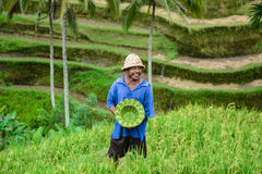 The Man and handmade hat at rice terrace in Bali Royalty Free Stock Photo