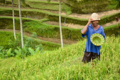 Man and handmade hat at rice terrace in Bali Royalty Free Stock Photo