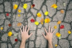 Man hands on asphalt road with colorful autumn leaves Royalty Free Stock Images
