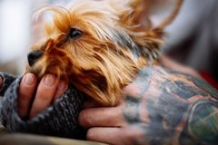 Man hands holding dog royalty free stock photos