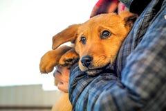 Man hands holding dog Royalty Free Stock Image