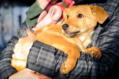 Man hands holding dog Royalty Free Stock Images