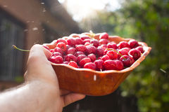 Man hands holding fresh bowl of cherry stock photography