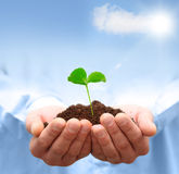 Man hands holding green plant. Ecology concept Royalty Free Stock Photos