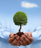 Man hands holding a green tree. Stock Photo