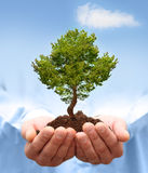 Man hands holding a green tree. Stock Images