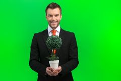 Man hands holding green tree. Royalty Free Stock Images