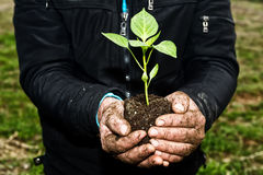 Man hands holding a green young plant. Symbol of spring and ecol. Ogy concept Royalty Free Stock Image