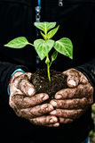 Man hands holding a green young plant. Symbol of spring and ecol Royalty Free Stock Image
