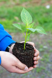 Man hands holding a green young plant. Symbol of spring Royalty Free Stock Photography