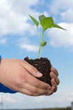 Man hands holding a green young plant. Symbol of spring Royalty Free Stock Photos