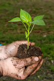 Man hands holding a green young plant. Symbol of spring  Royalty Free Stock Image