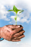 Man hands holding a green young plant. Symbol of spring. And ecology concept Stock Photography