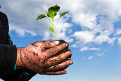 Man hands holding a green young plant. Symbol of spring  Royalty Free Stock Photo