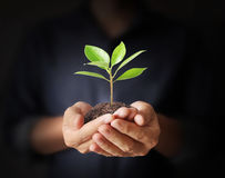 Man hands holding plant Royalty Free Stock Images