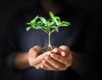 Man hands holding plant Stock Image
