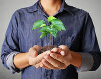 Man hands holding plant Royalty Free Stock Image