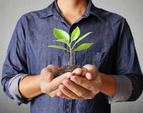 Man hands holding plant Stock Photo