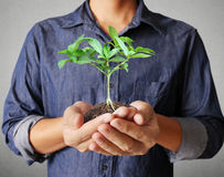 Man hands holding plant Royalty Free Stock Photos